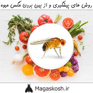روش های پیشگیری و از بین بردن مگس میوه