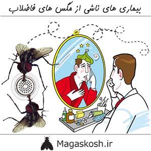بیماری های ناشی از مگس های فاضلاب