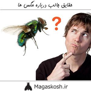 حقایق جالب درباره مگس ها