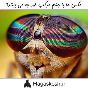 مگس ها با چشم مرکب خود چه می بینند؟