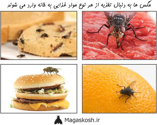 برای خلاصی از شر مگس ها مواد جذب کننده این حشرات را از دسترس خارج کنید